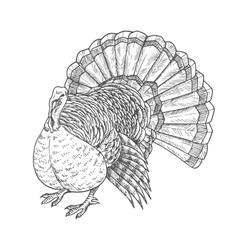 Thanksgiving turkey sketch isolated icon vector image