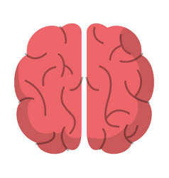 Brain organ human function image vector