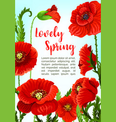Poppy flowers for spring time holidays vector