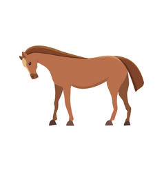 isolated horse cute cartoon farm anima vector image vector image