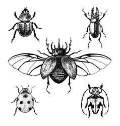 Hand drawn beetles set vector