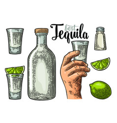 set tequila hand hold glass bottle salt lime vector image vector image