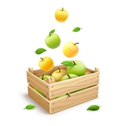 Apple fruits falling into the vector