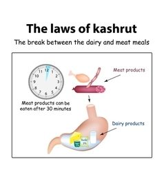 The laws of kosher The break between the dairy vector image