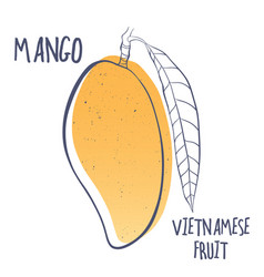 Mango icon of vietnamese fruit vector