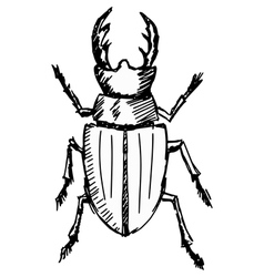 Stag-beetle vector