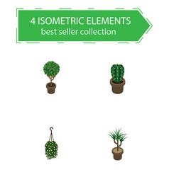 Isometric flower set of peyote houseplant tree vector