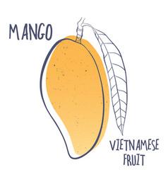 Mango icon of vietnamese fruit vector