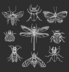 insect set black vector image