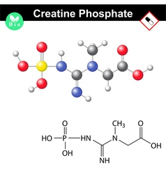 Phosphocreatine molecule - creatine phosphate vector