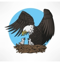 Bald eagle in the nest vector
