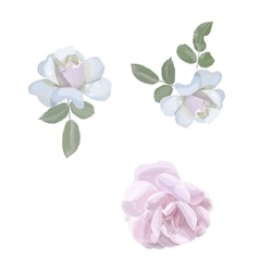 Watercolor roses elements vintage leaves vector