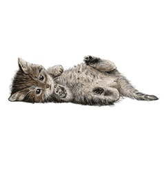 Cat 01 vector image