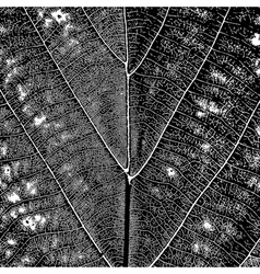 Leaf Texture vector image