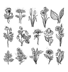 Hand drawn wildflowers vector
