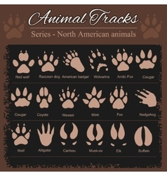 Animal footprints - north american animals vector