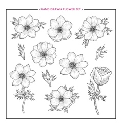 Flower set hand drawn anemone vector