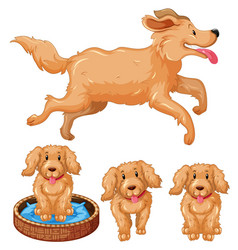 dog and puppies with brown fur vector image vector image