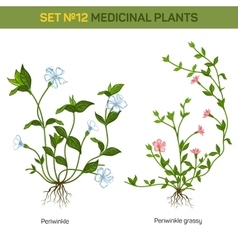Blossom of herbal periwinkle with branch and vector