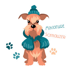 miniature schnauzer dog in winter hat and scarf vector image vector image