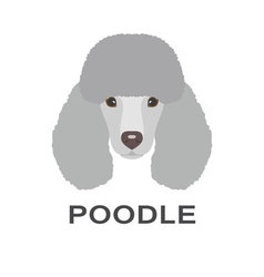 Poodle in flat style poodle flat icon vector