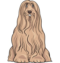 Bearded collie dog cartoon vector