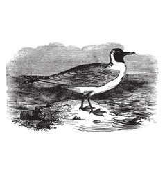 Masked gull vintage vector