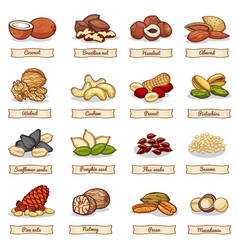 Cartoon color nut and seed grains vector