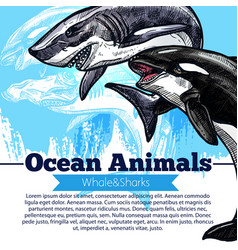 killer whale or orca and shark fish poster vector image vector image