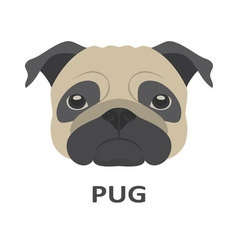 Pug in flat style vector