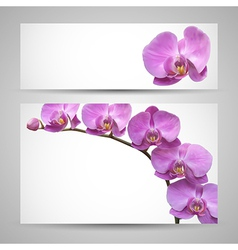 Orchid flower template vector image