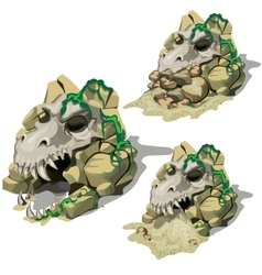 Three skulls of the animals in bottom cave vector