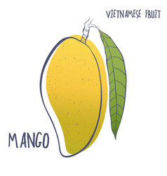 Hand drawn mango fruit icon vector