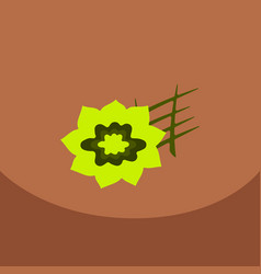 stars of anise isolated on the color background vector image