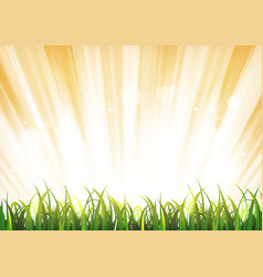 Summer sunshine background with grass leaves vector