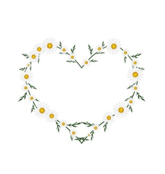 Beautiful white daisy flowers in heart shape vector