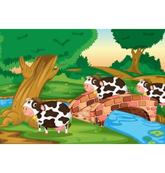 3 cows vector image