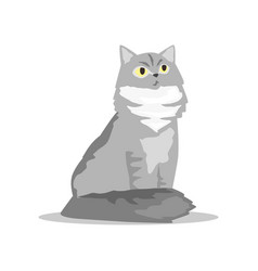 Fluffy siberian cat with gray fur pet with vector