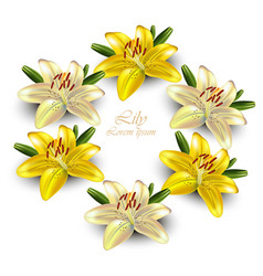 yellow lily wreath delicate floral card vector image