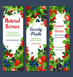 Berries and sweet fruits banners set vector