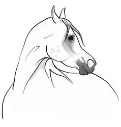 arab horse vector image
