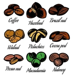 Set of colored symbols patterns different seeds vector