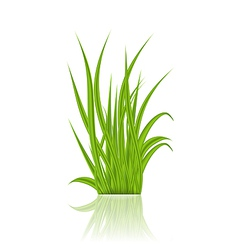 Summer green grass with reflection vector image