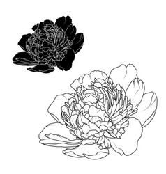 Peony rose flowers isolated black white contrast vector