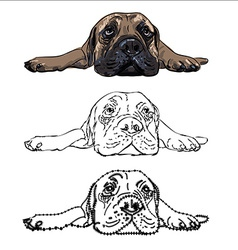 Drawing of lying bullmastiff vector