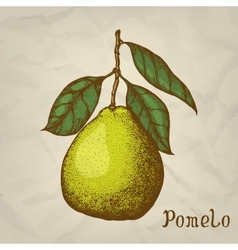 Pomelo hand drawn pomelo vector