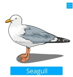 Seagull learn birds educational game vector