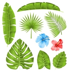 Set of Tropical Leaves Collection Plants Isolated vector image vector image
