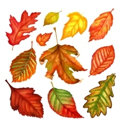 Autumn leaves a watercolor on a white background vector