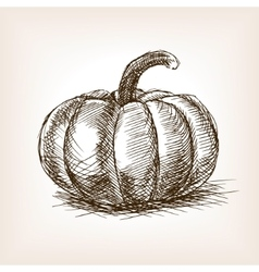 Pumpkin hand drawn sketch style vector image